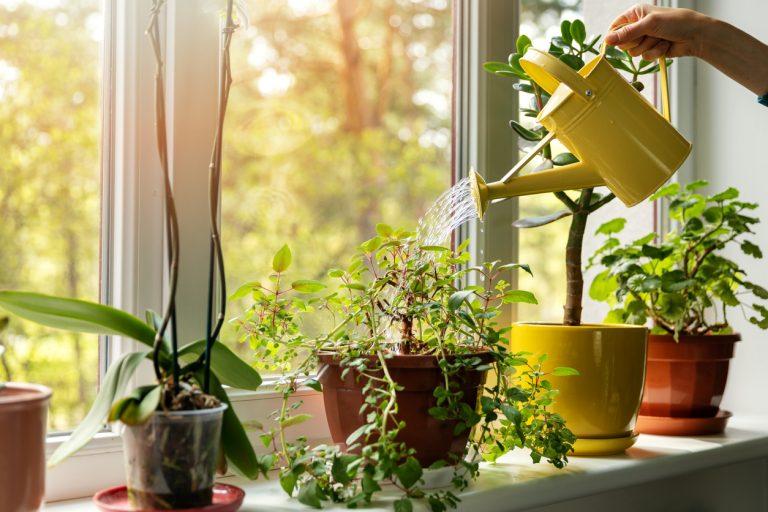 Rastliny na okenných parapetoch: Ktorým druhom sa darí najviac a ako ich pestovať