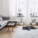 interiérové rastliny na parapete v obývacej izbe