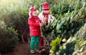 Čo by ste mali vedieť pred kúpou živého vianočného stromčeka