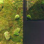 Zelená stena z machu