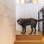 Schodisko a pes