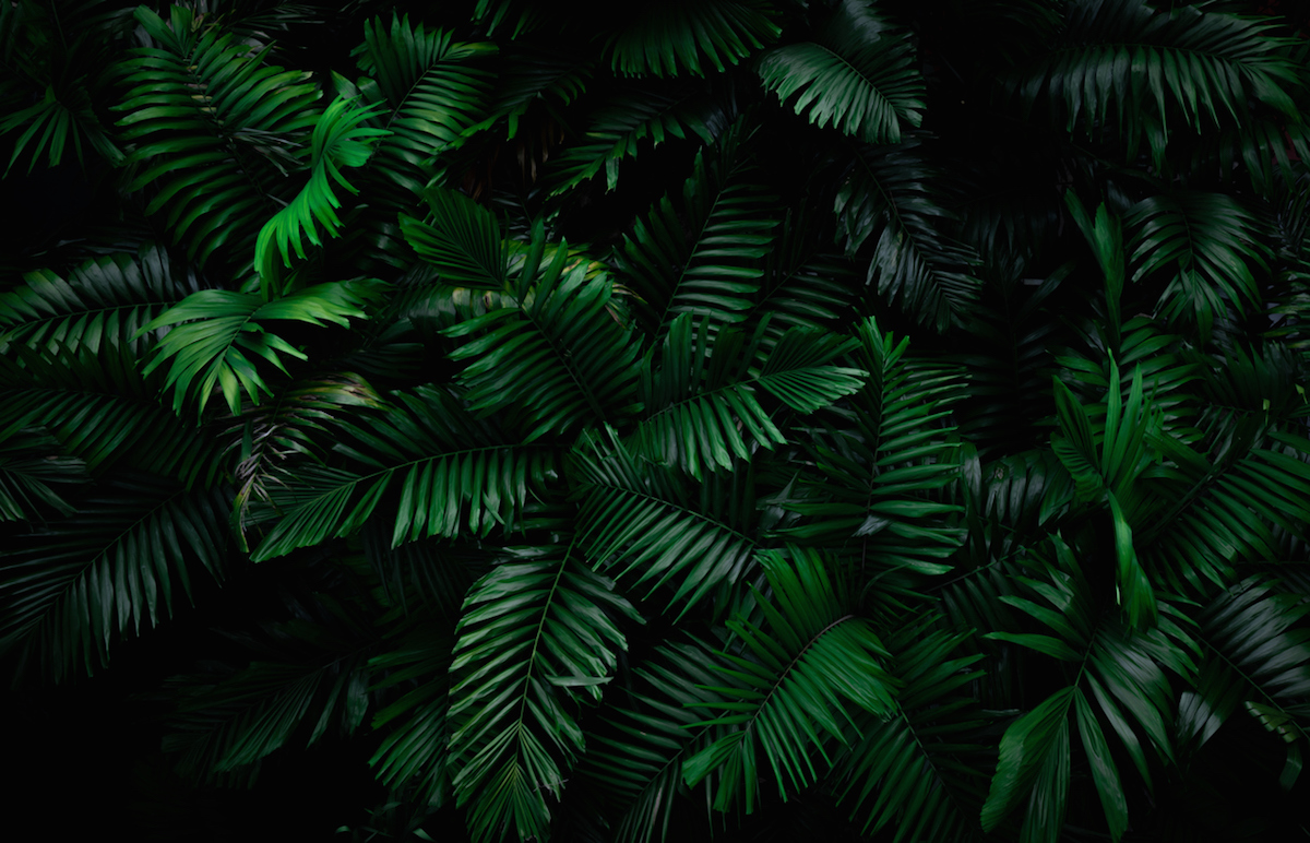 Fern leaves on dark background in jungle. Dense dark green fern leaves in garden at night. Nature abstract background. Fern at tropical forest. Exotic plant. Beautiful dark green fern leaf texture.