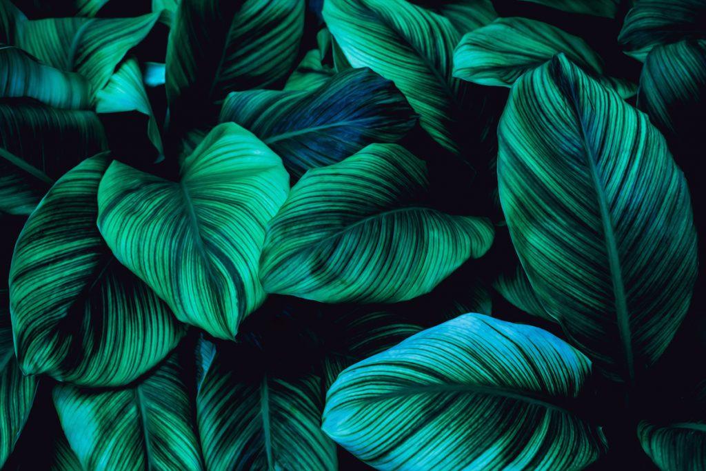 Tapeta tropické listy
