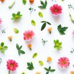 Kvetinový vzor tapety