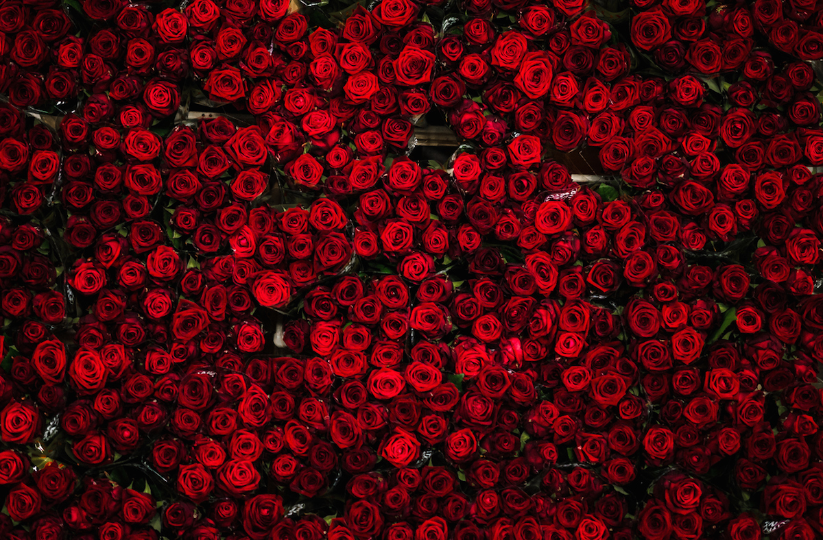 Countless dozens of beautiful red roses on a flower cart, seen from above, at a flower auction
