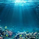 Tropická hladina mora