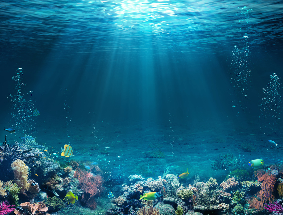 Underwater Scene – Tropical Seabed With Reef And Sunshine.