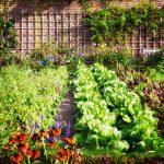 Hriadky v záhrade