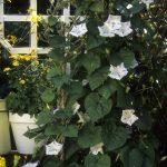Bohatá kvetinová stena