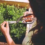 Zastrihávanie byliniej