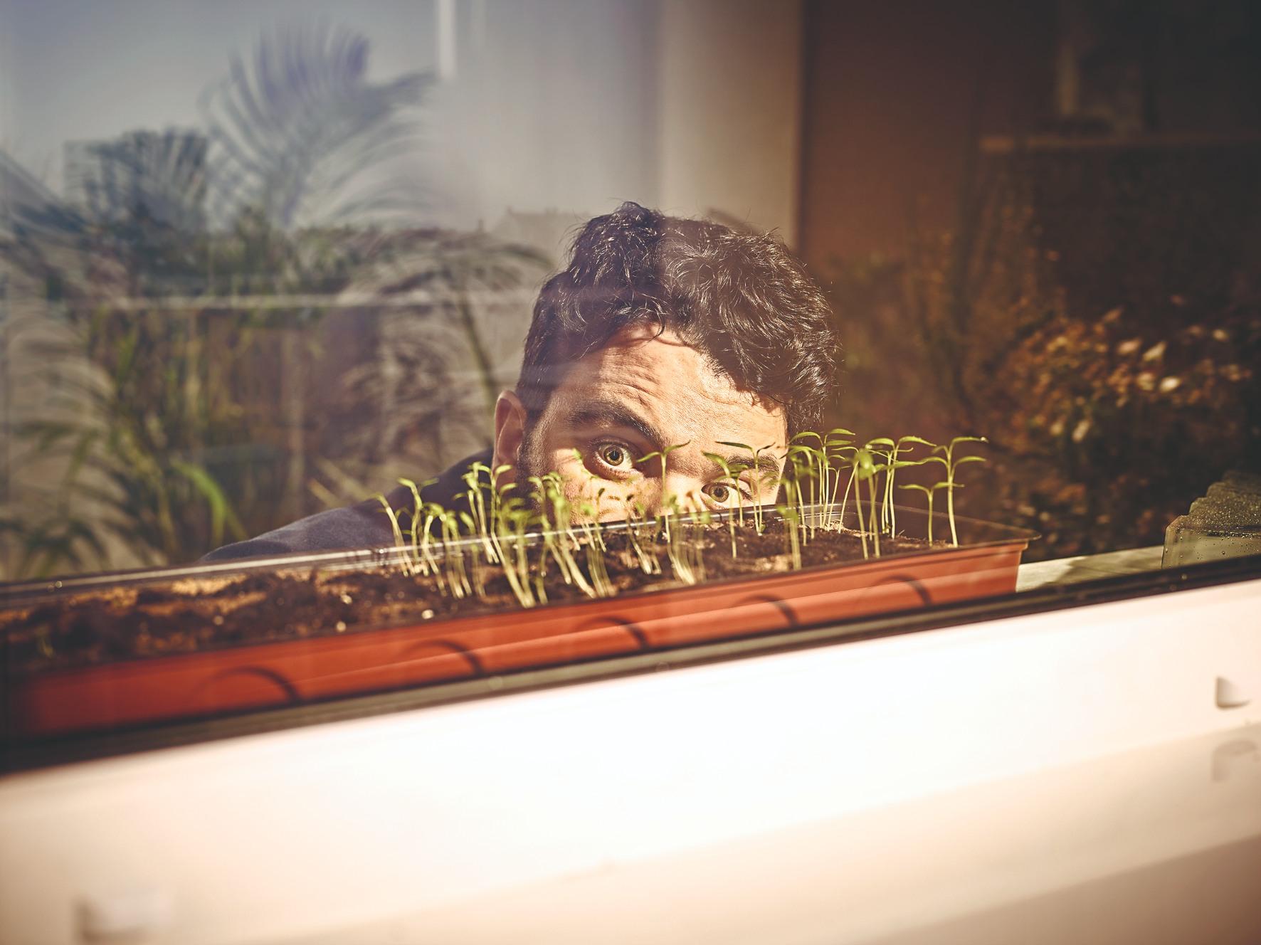 Naklíčené bylinky v okne