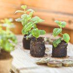 Sadenice byliniek