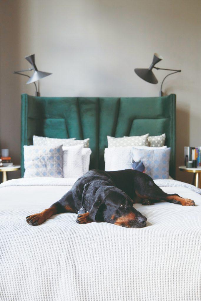 Domáci miláčik na posteli