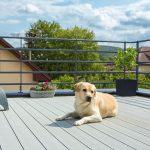 Drevoplastová terasa so psom