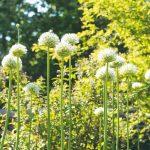 Rastliny v záhrade