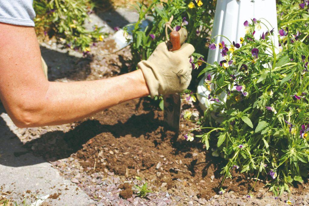 Aké povinnosti vás v apríli čakajú v záhrade?