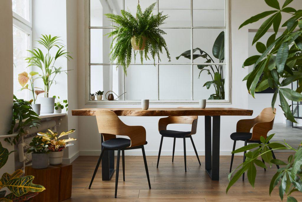 6 interiérových rastlín, ktoré skrášlia vašu kuchyňu a nie sú náročné na údržbu