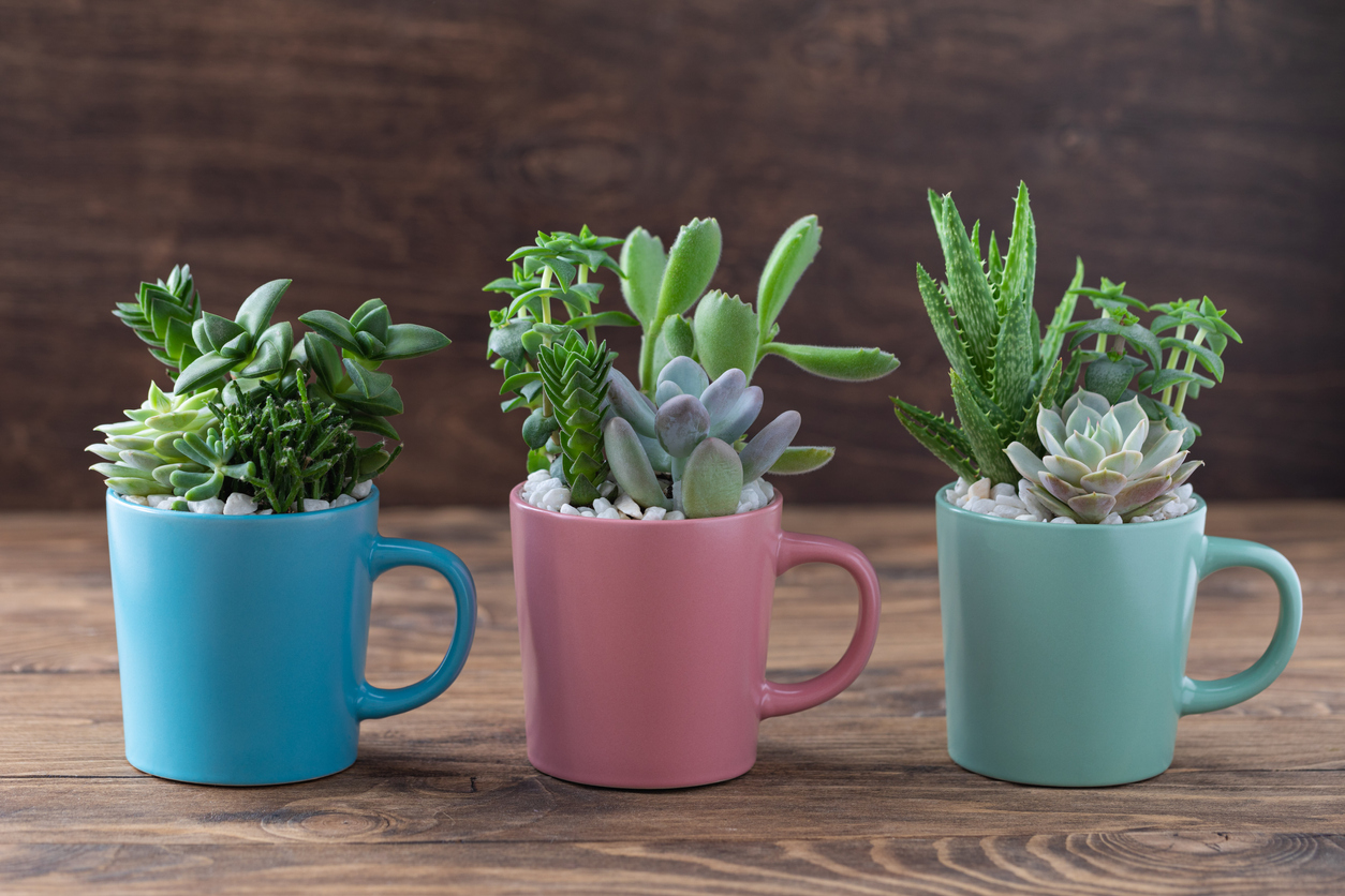 Easy handmade home decoration with succulents in colourful mugs