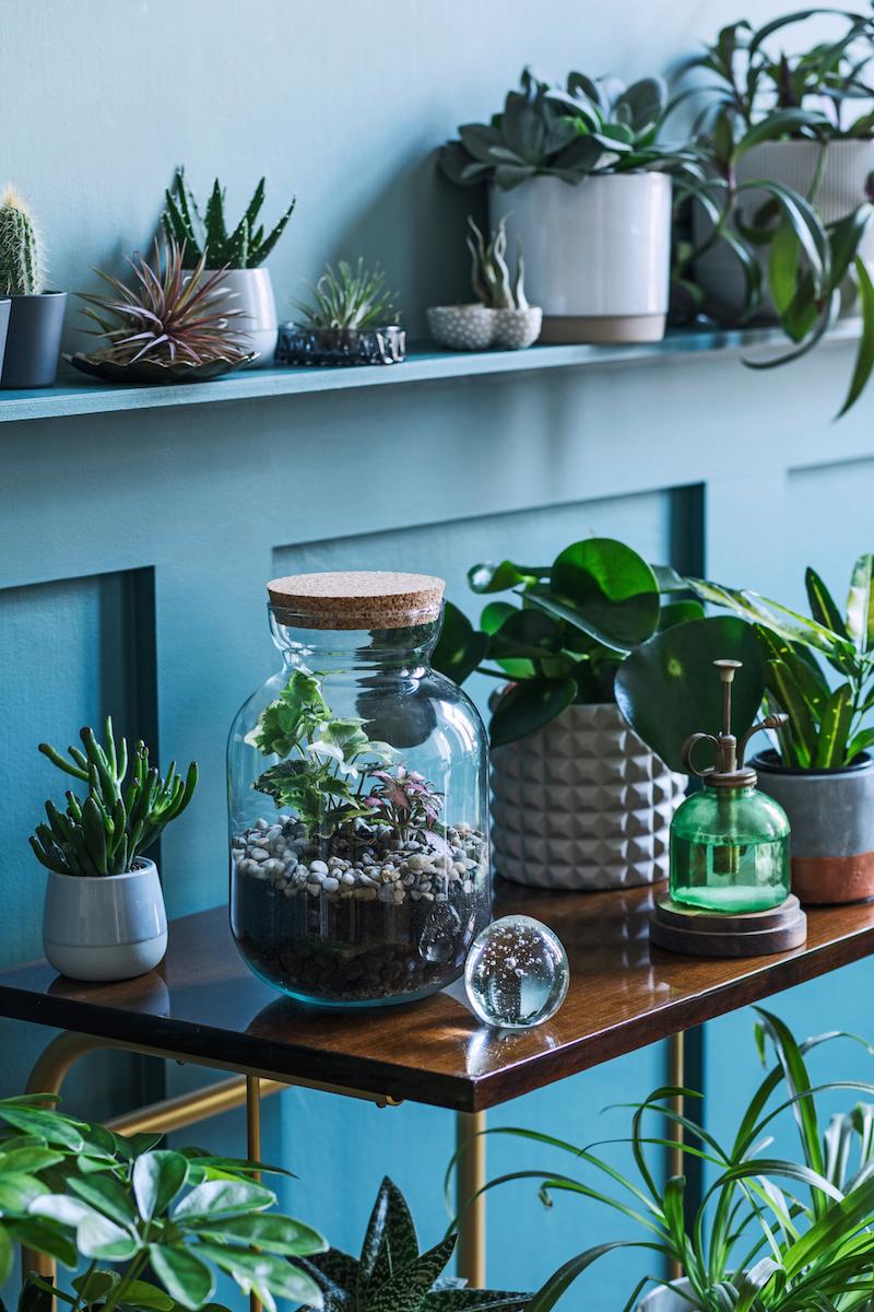 Rôzne rastliny v byte