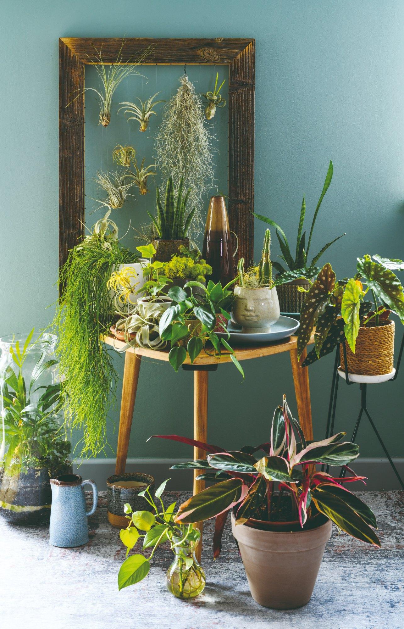 Izbové rastliny na stolíku