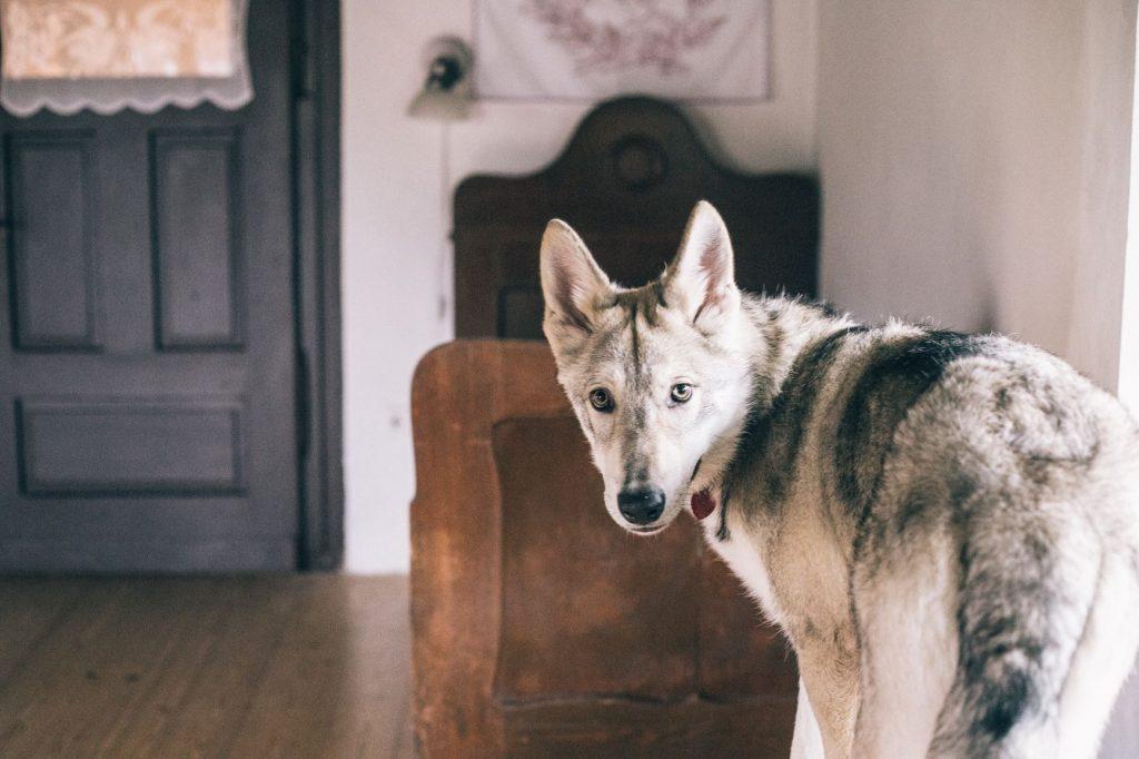 Pôvodný nábytok v drevenici a pes