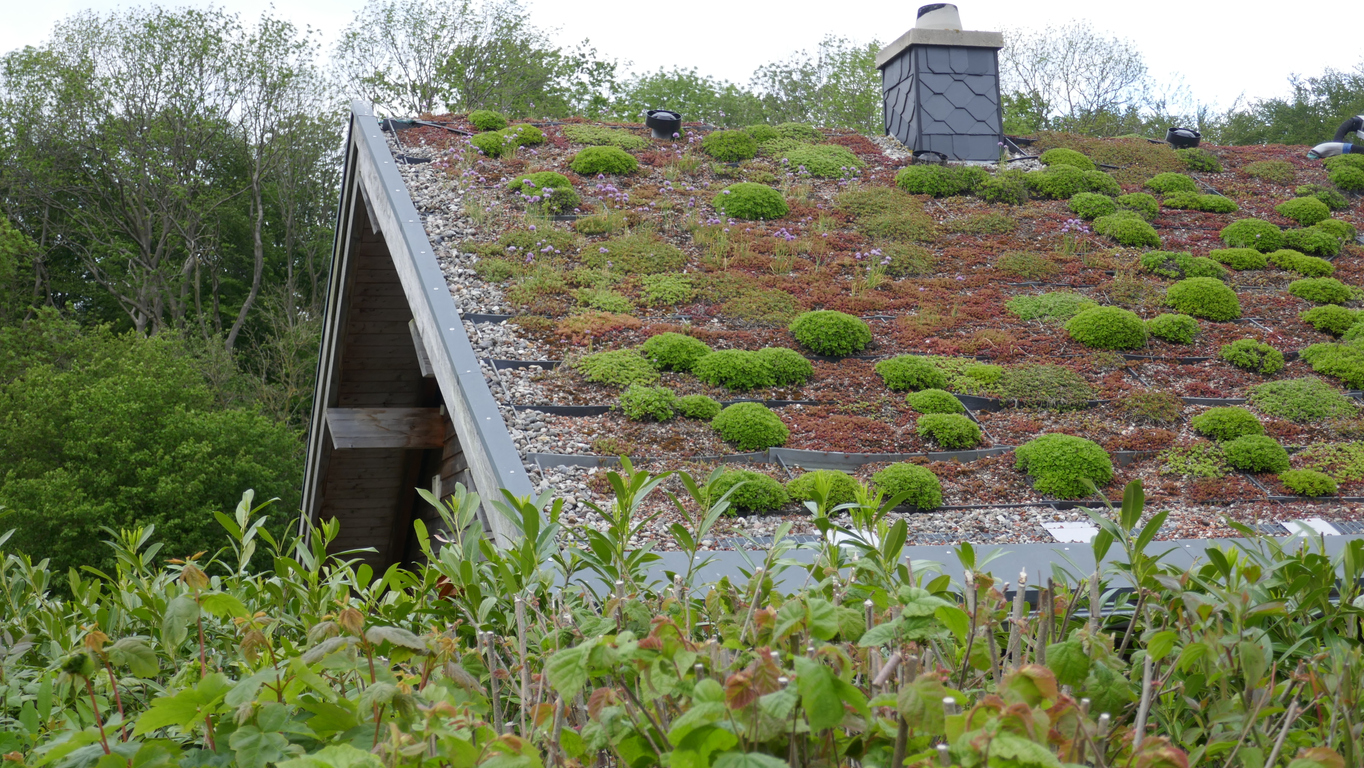 Green roof of an ecological house, energy-planted  with grass and moss