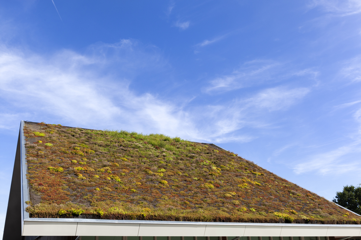 Sustainable and ecological green roof