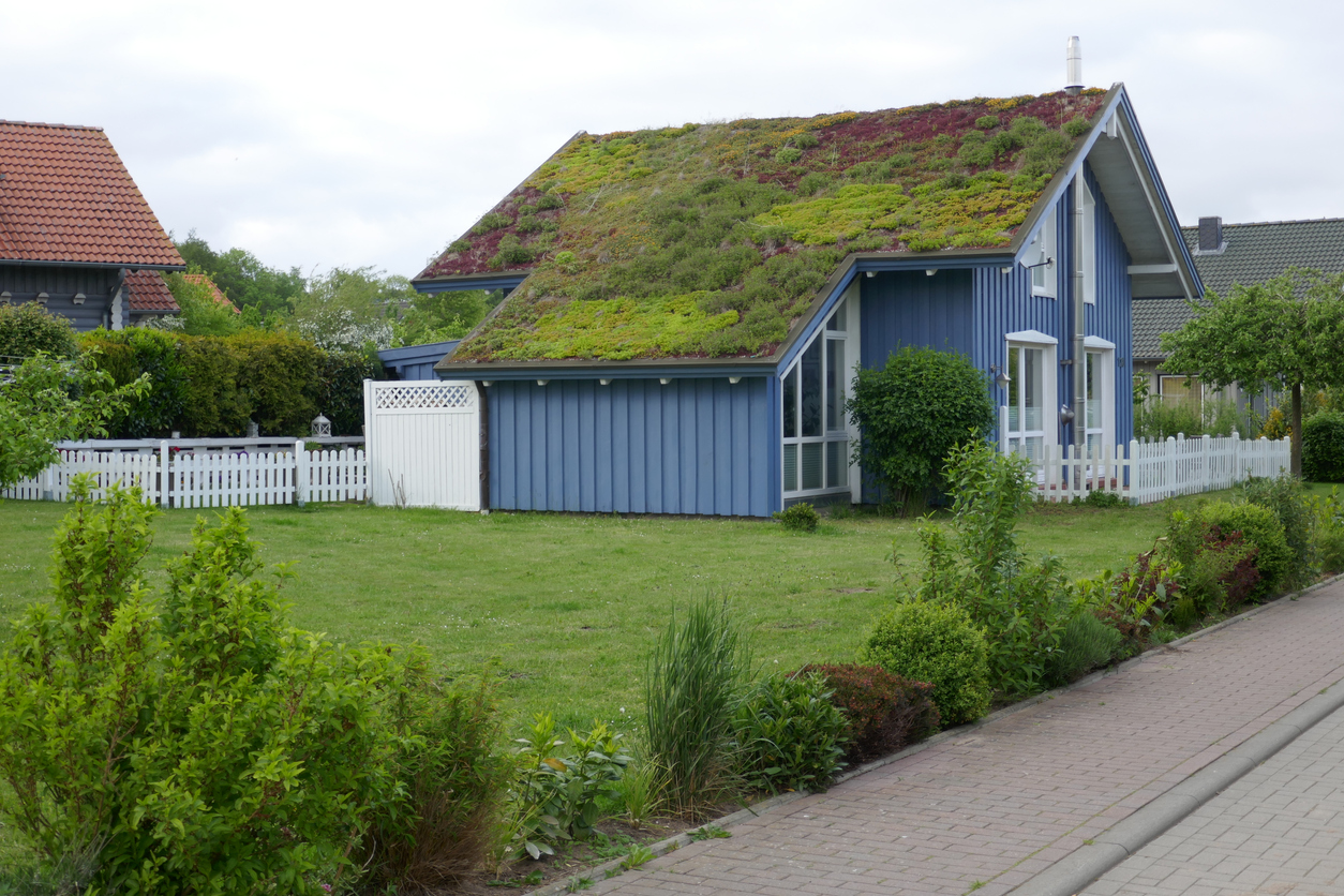 Idyllic blue wooden house in the countryside with green plants on the roof. Hohwacht, Schleswig-Holstein, Germany