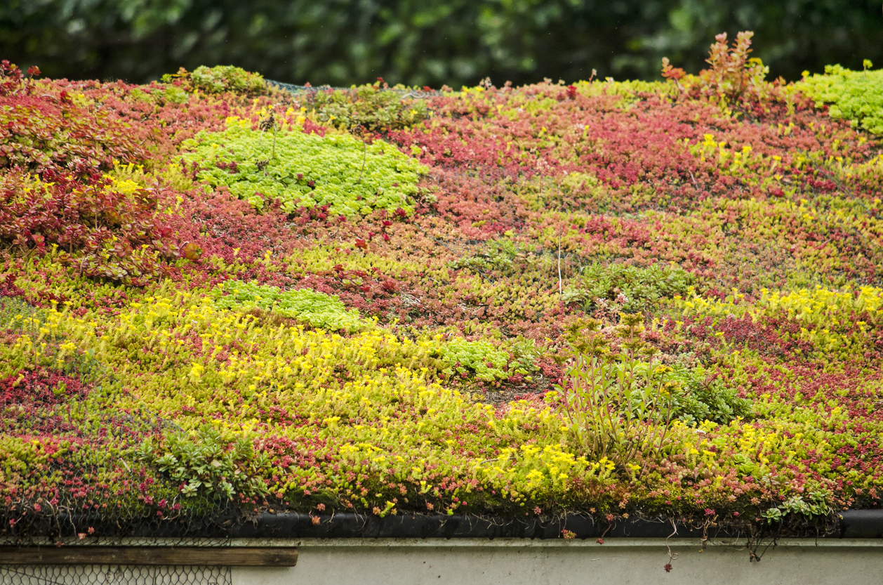 Colorful sedum roof