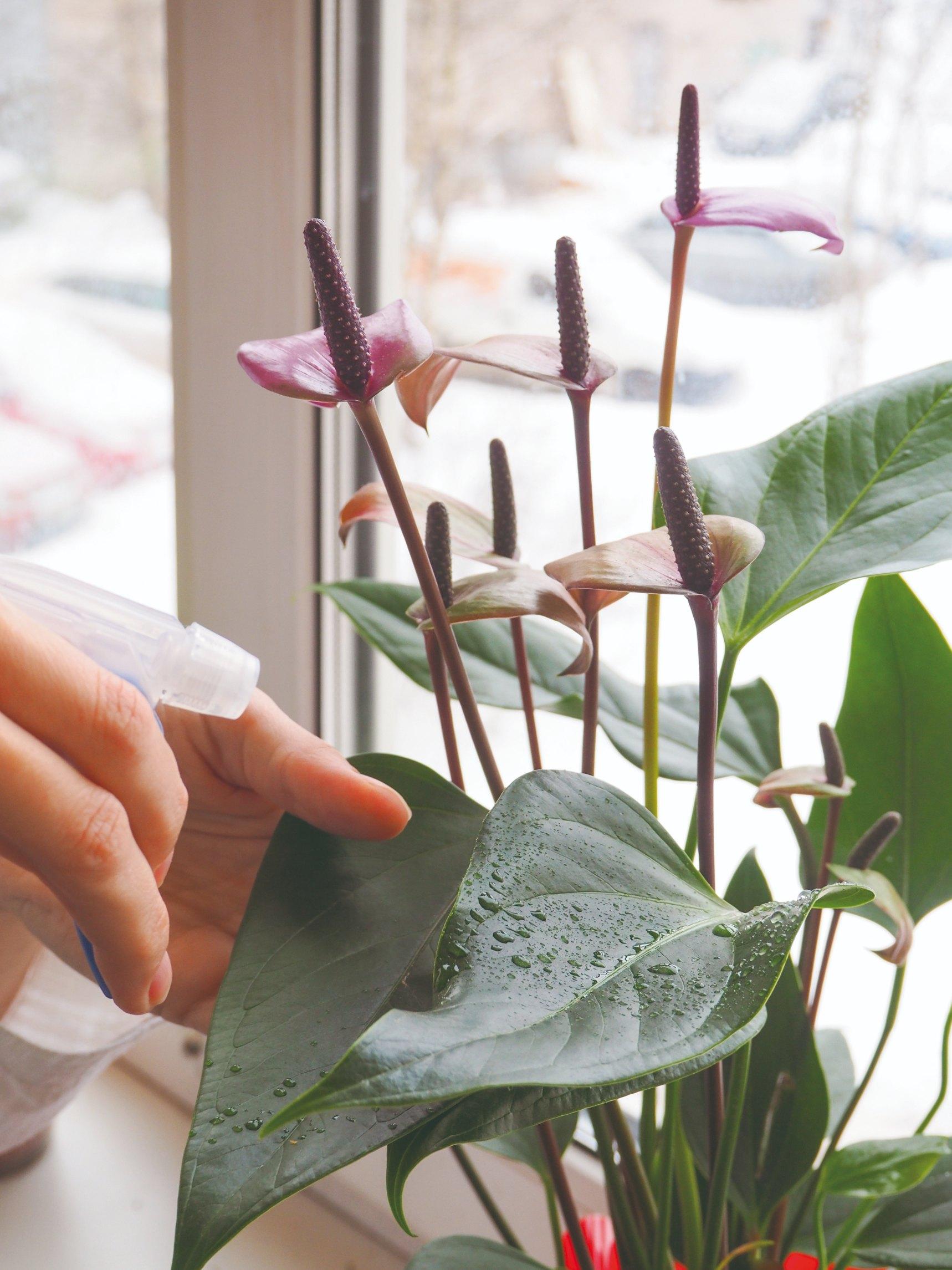Kropenie rastlín