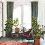 Izbové rastliny v obývačke