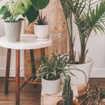 Izbové rastliny v byte