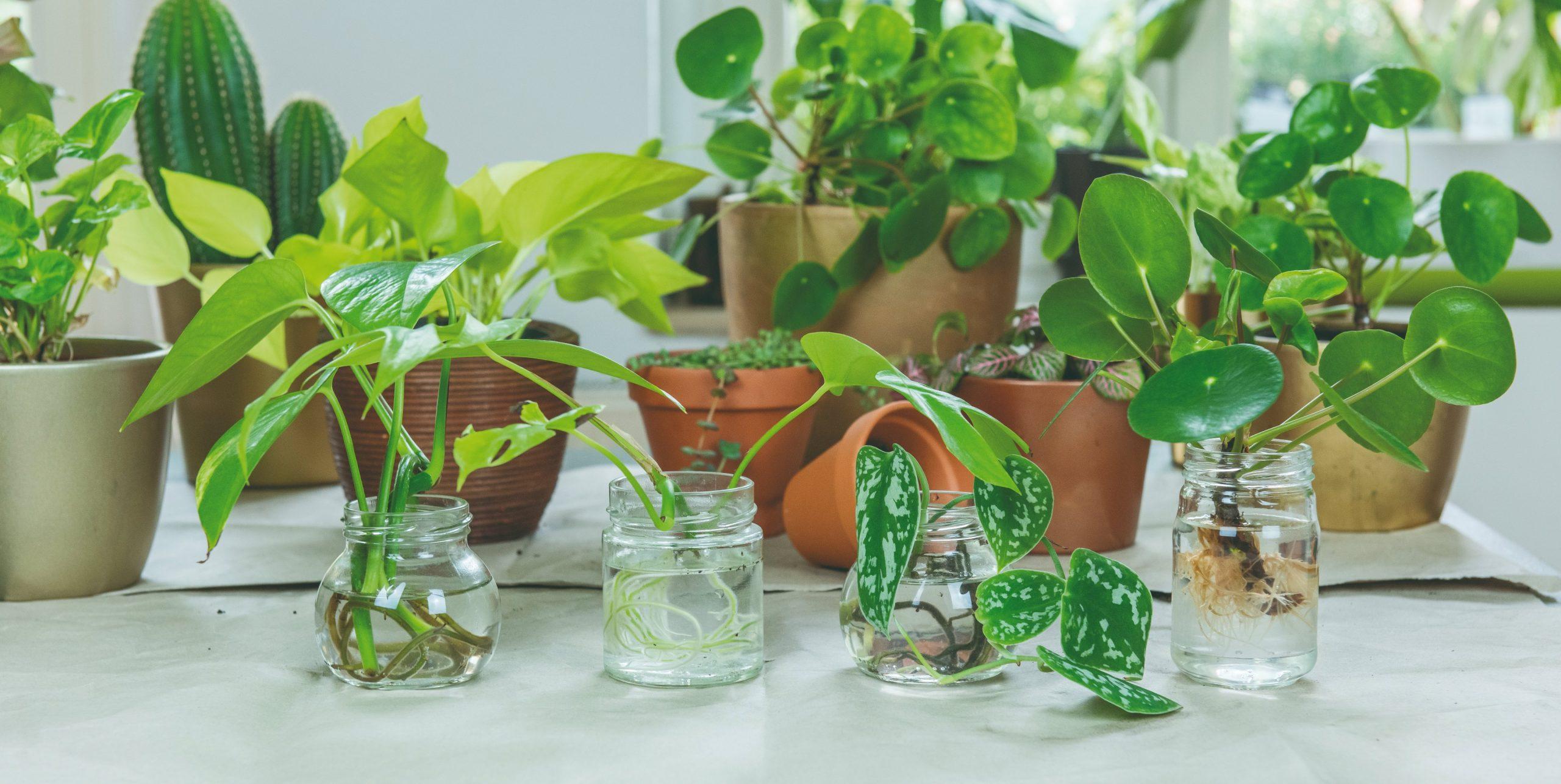 Výhonky rastlín