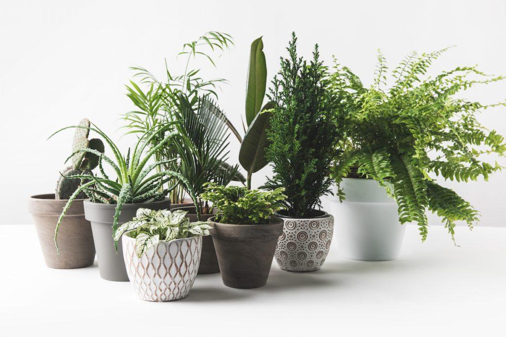 Veľký sprievodca interiérovými rastlinami: Výber, starostlivosť aj rozmnožovanie