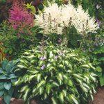 Trs záhradných rôznych rastlín