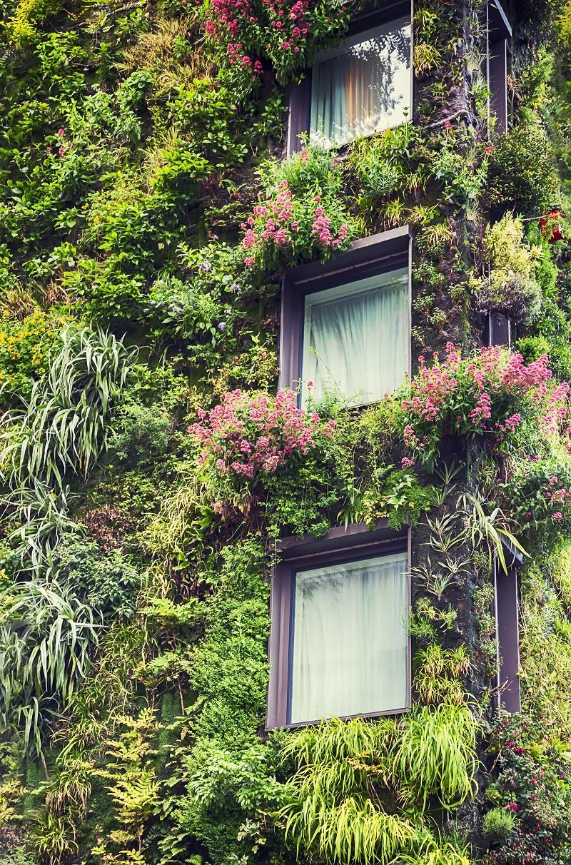 popínavé rastliny na fasáde domu