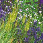 Bohato kvitnúce rastliny