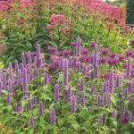 Kvitnúce trvalky v trse v záhrade