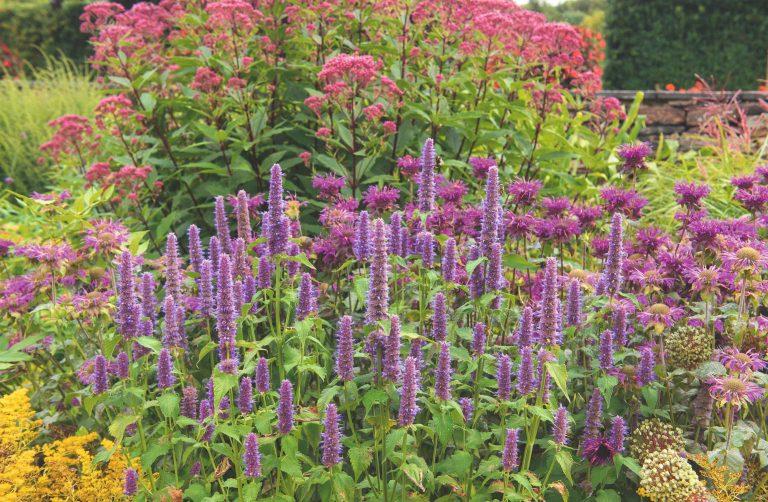 Aké rastliny by nemali chýbať v kvetinovom záhone a ako ich spolu kombinovať