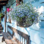 Pavlač závesná kvetina