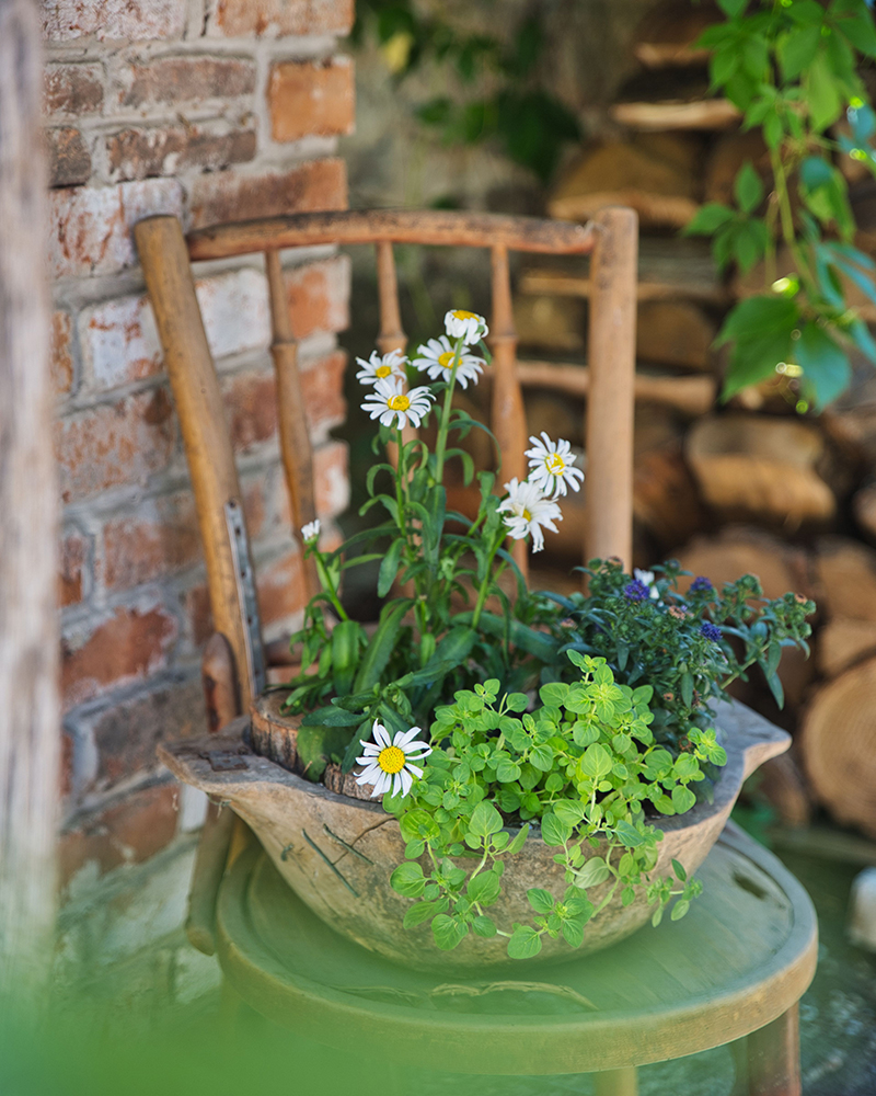 skalničky v kvetináči