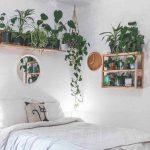 Polica plná izbových kvetov nad posteľou