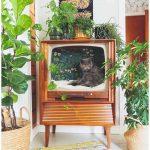Starý televízor ako pelech pre mačku