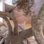 Strmý pozemok so stromom
