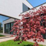 Átrium s červeným stromom