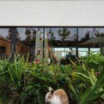 Zajac v záhrade pred domom