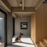 Pes v chodbe domu so schodiskom
