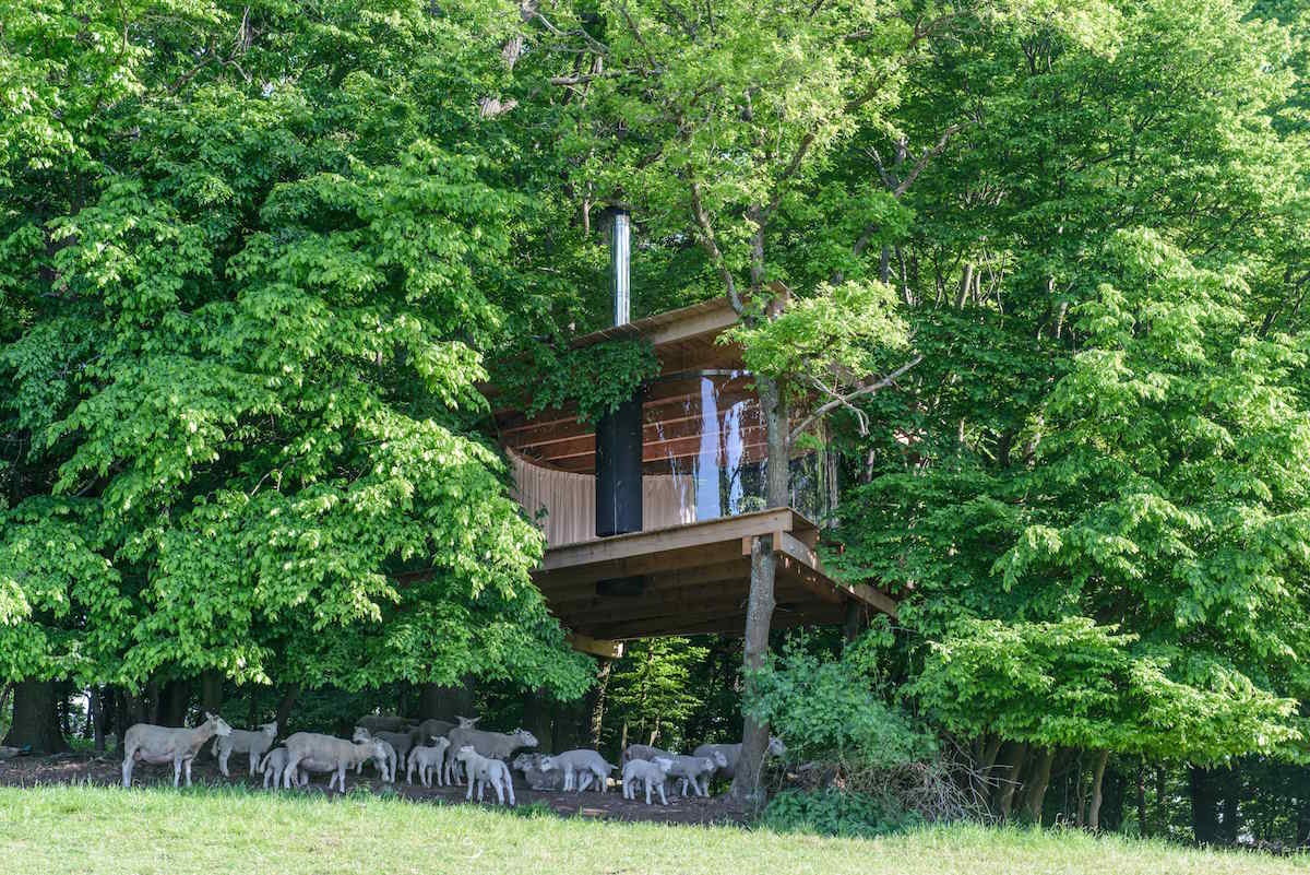 Stromodom na pasienku pre ovce
