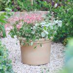 Pastelová kombinácia kvetov v kvetináči