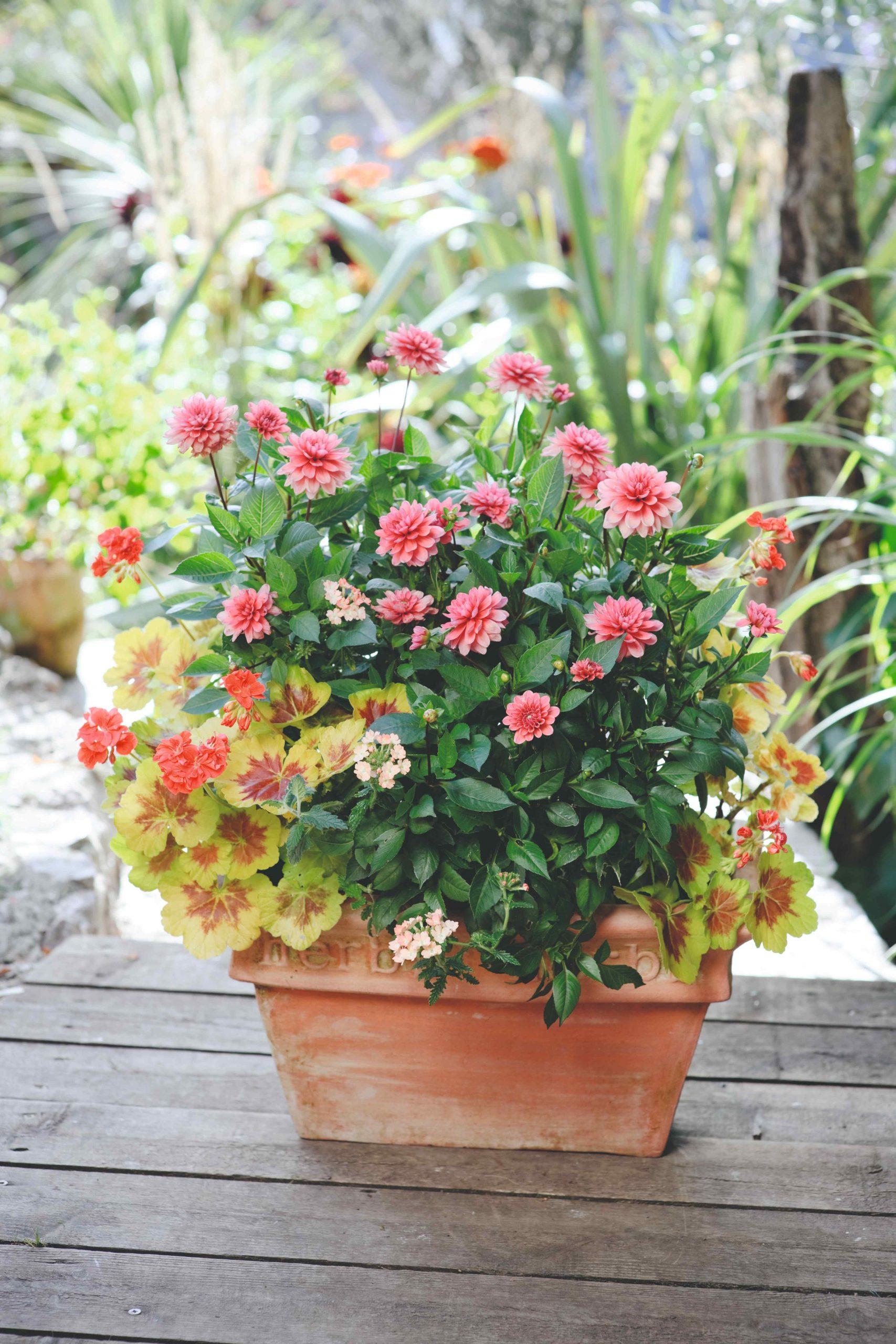 Kvetináč s ružovými kvetmi a zeleňou